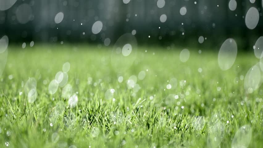 rain and crops NSW