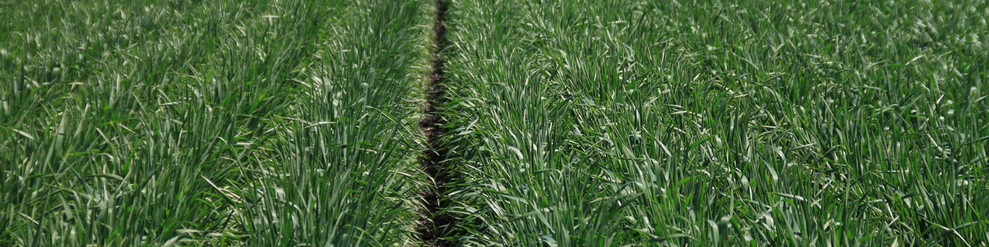 Sell Grain NSW